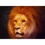 Grafika-01485 Lion