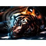 Grafika-01490 Tigre