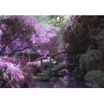 Grafika-01499 Pont Zen