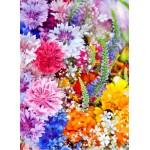 Grafika-01640 Explosion de Fleurs