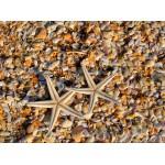 Grafika-01685 Coquillages et Etoiles de Mer