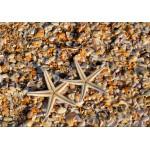 Grafika-01686 Coquillages et Etoiles de Mer