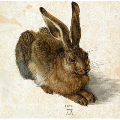Grafika-01710 Albrecht Dürer - Le Lapin, 1502