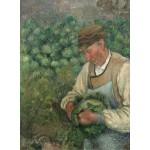 Grafika-02021 Camille Pissarro : Le Jardinier - Vieux Paysan avec Chou, 1883-1895