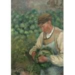 Grafika-02022 Camille Pissarro : Le Jardinier - Vieux Paysan avec Chou, 1883-1895