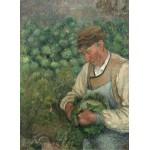 Grafika-02023 Camille Pissarro : Le Jardinier - Vieux Paysan avec Chou, 1883-1895
