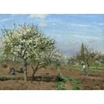 Grafika-02027 Camille Pissarro : Verger en Fleurs, Louveciennes, 1872