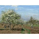 Grafika-02029 Camille Pissarro : Verger en Fleurs, Louveciennes, 1872