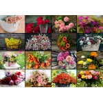 Grafika-02569 Collage - Fleurs