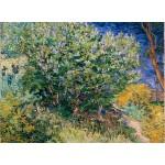 Grafika-02789 Vincent Van Gogh - Lilas, 1889