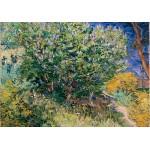 Grafika-02791 Vincent Van Gogh - Lilas, 1889