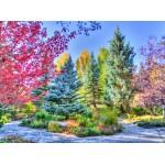 Grafika-02816 Forêt Colorée, Colorado, USA
