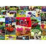 Grafika-02908 Collage - Vélos