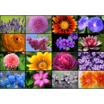 Grafika-T-00056 Collage - Fleurs de Printemps
