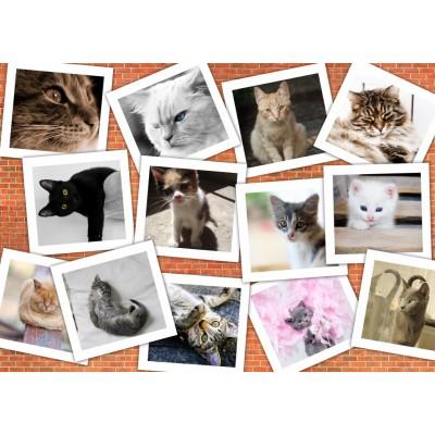 Grafika-T-00381 Chats