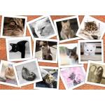 Grafika-T-00382 Chats