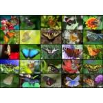Grafika-T-00622 Collage - Papillons