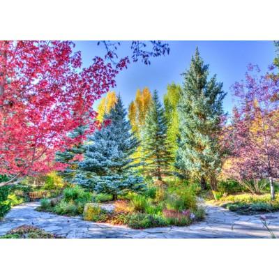 Grafika-T-00853 Forêt Colorée, Colorado, USA