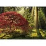 Heye-29855 Aaron Reed - Guiding Light
