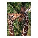 Jumbo-18340 Girafes