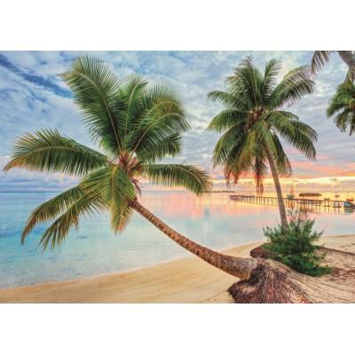 Jumbo-18363 Polynésie Française