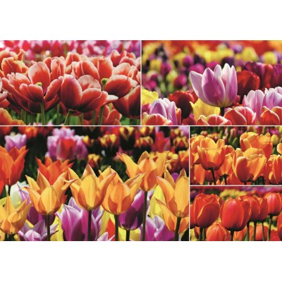 Jumbo-18364 Tulipes