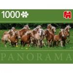 Jumbo-18827 Haflinger Horses