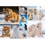 King-Puzzle-55870 Collage - Artic Life