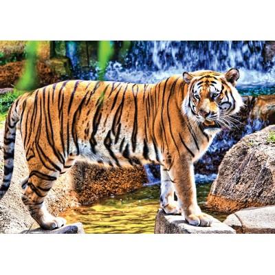 KS-Games-10102 Amazing Tiger