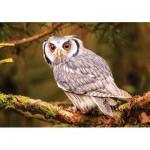 KS-Games-10104 Bengal Eagle Owl
