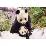 KS-Games-10109 Panda Mother