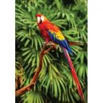 KS-Games-10111 Scarlet Macaw