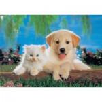 KS-Games-11026 Cat & Dog