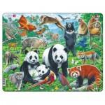 Larsen-FH43 Puzzle Cadre - Panda Bear Family on a China Mountain Plateau
