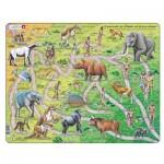 Larsen-HL3-IT Puzzle Cadre - Il percorso da scimmia ad essere umano