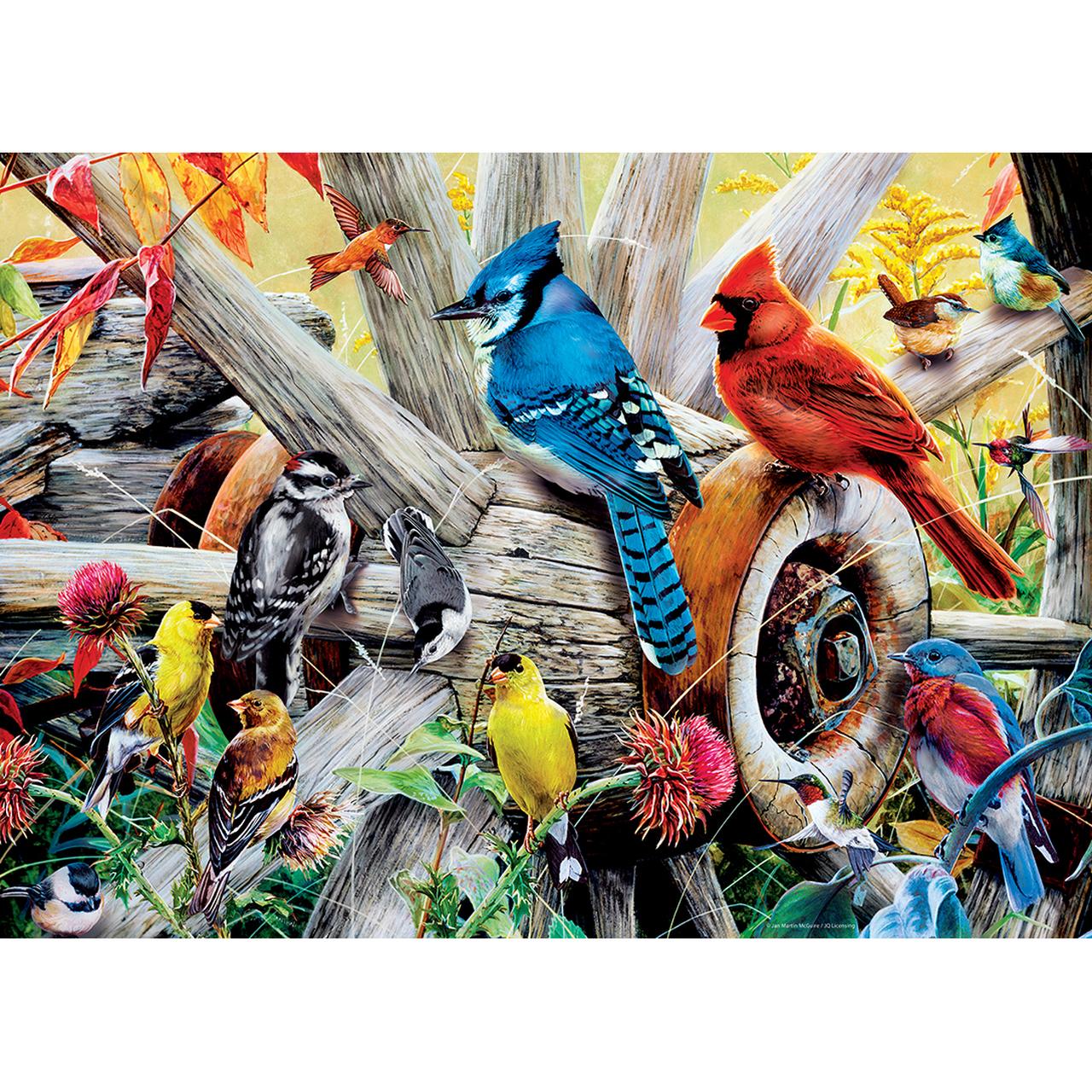 backyard-birds