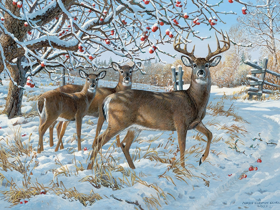 persis-clayton-weirs-winter-deer