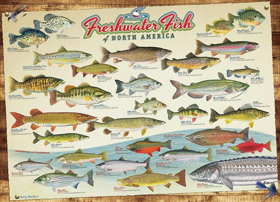 poissons-d-eau-douce-d-amerique-du-nord