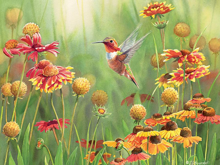 pieces-xxl-rufous-hummingbird