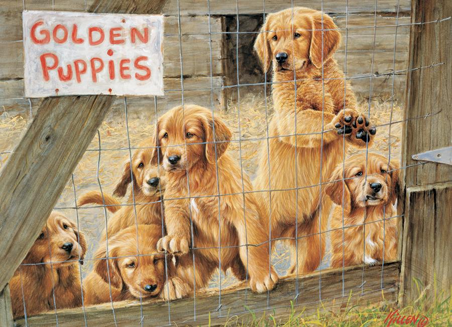 pieces-xxl-golden-puppies
