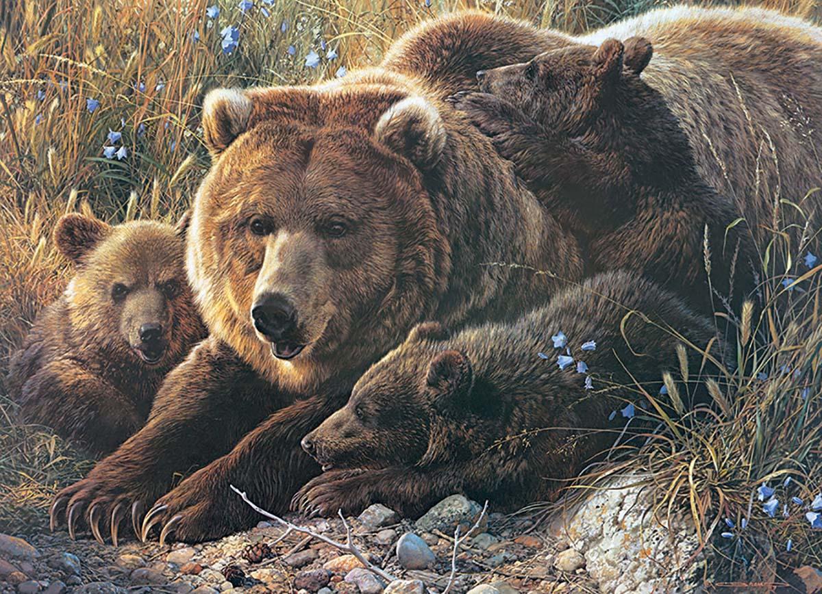 pieces-xxl-grizzly-family