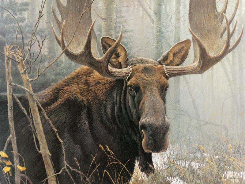 pieces-xxl-bull-moose