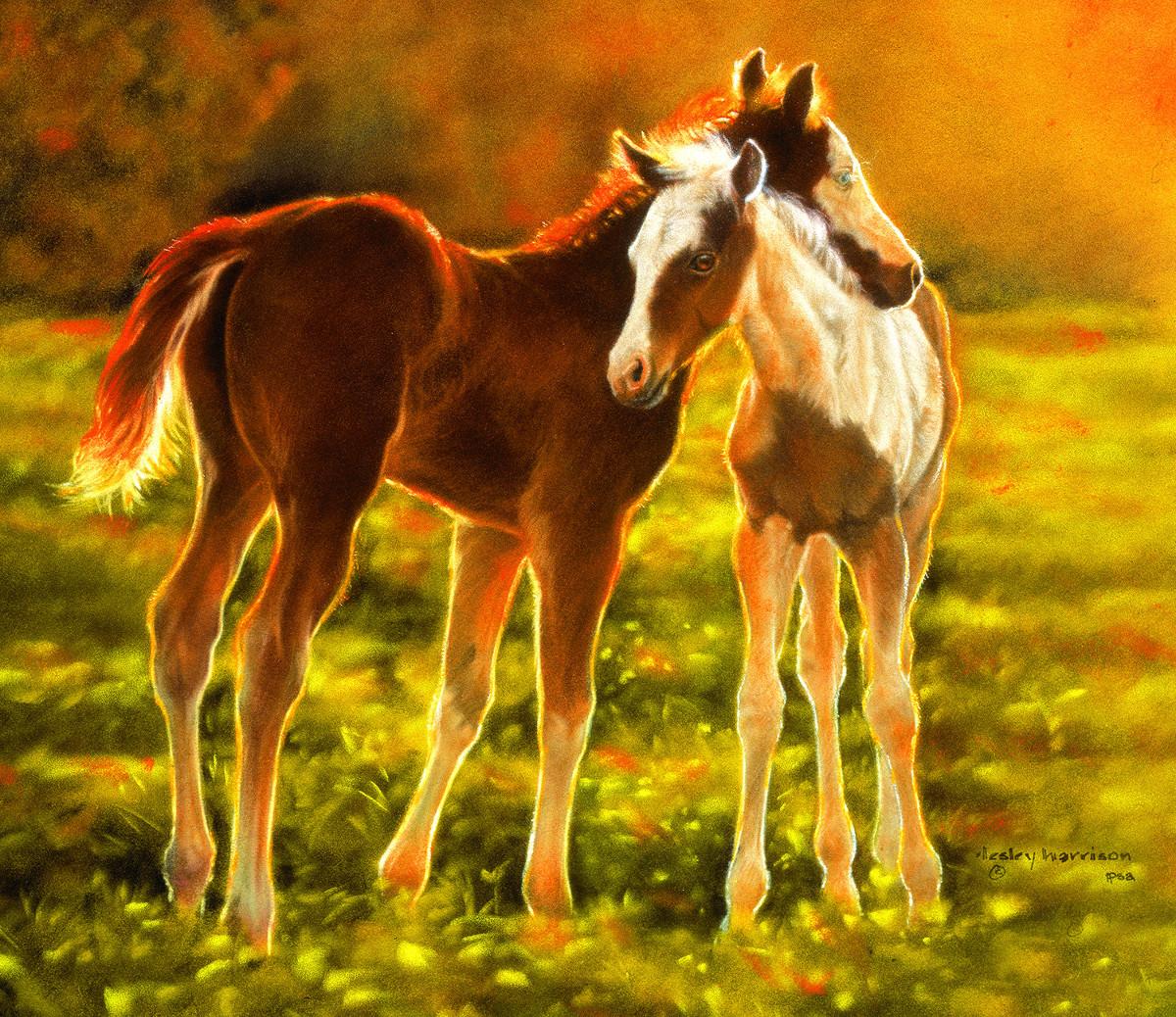 lesley-harrison-backlit-foals