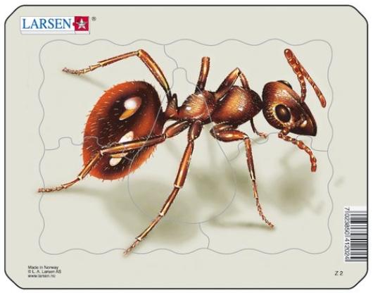 puzzle-cadre-fourmi