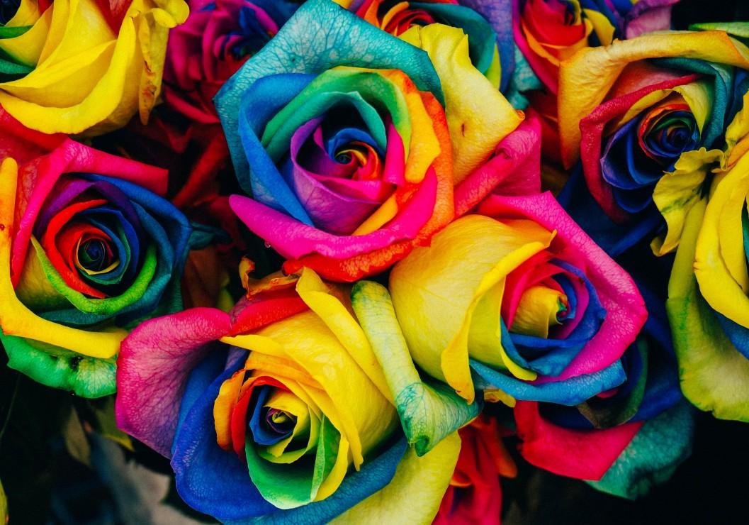 roses, 13.46 EUR @ go