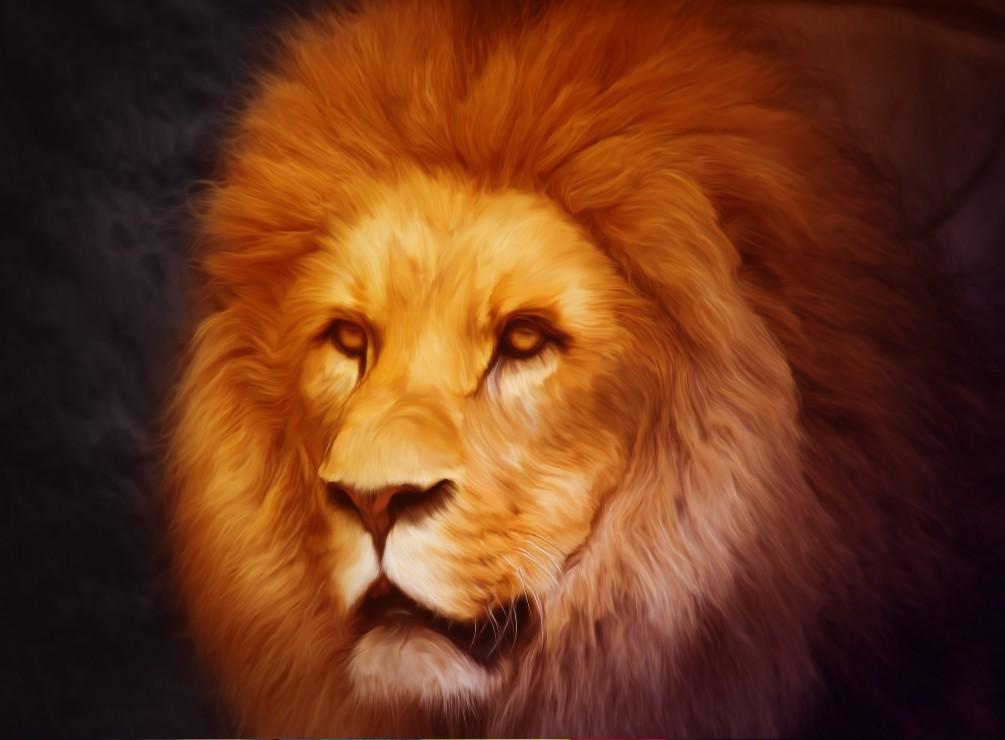 lion, 24.95 EUR @ go