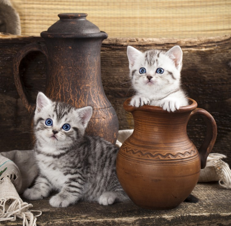chatons-en-pots