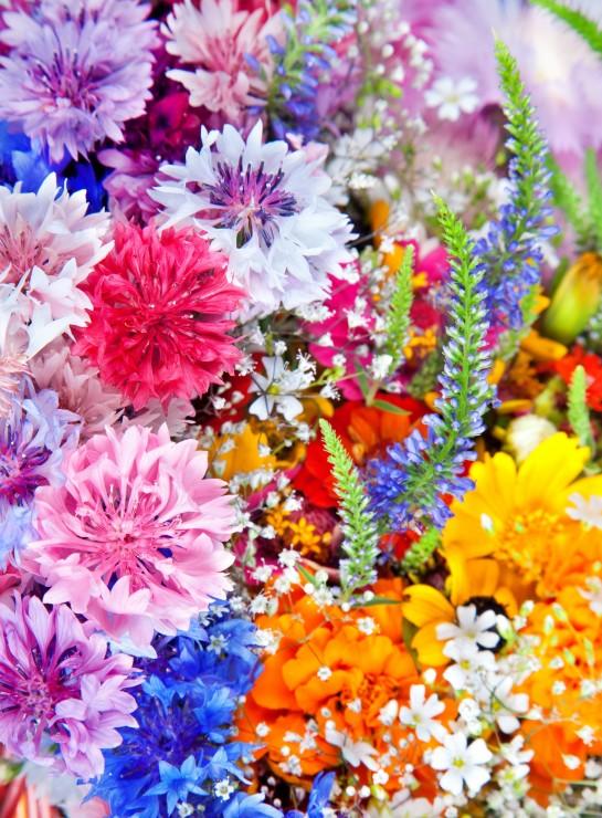 explosion-de-fleurs