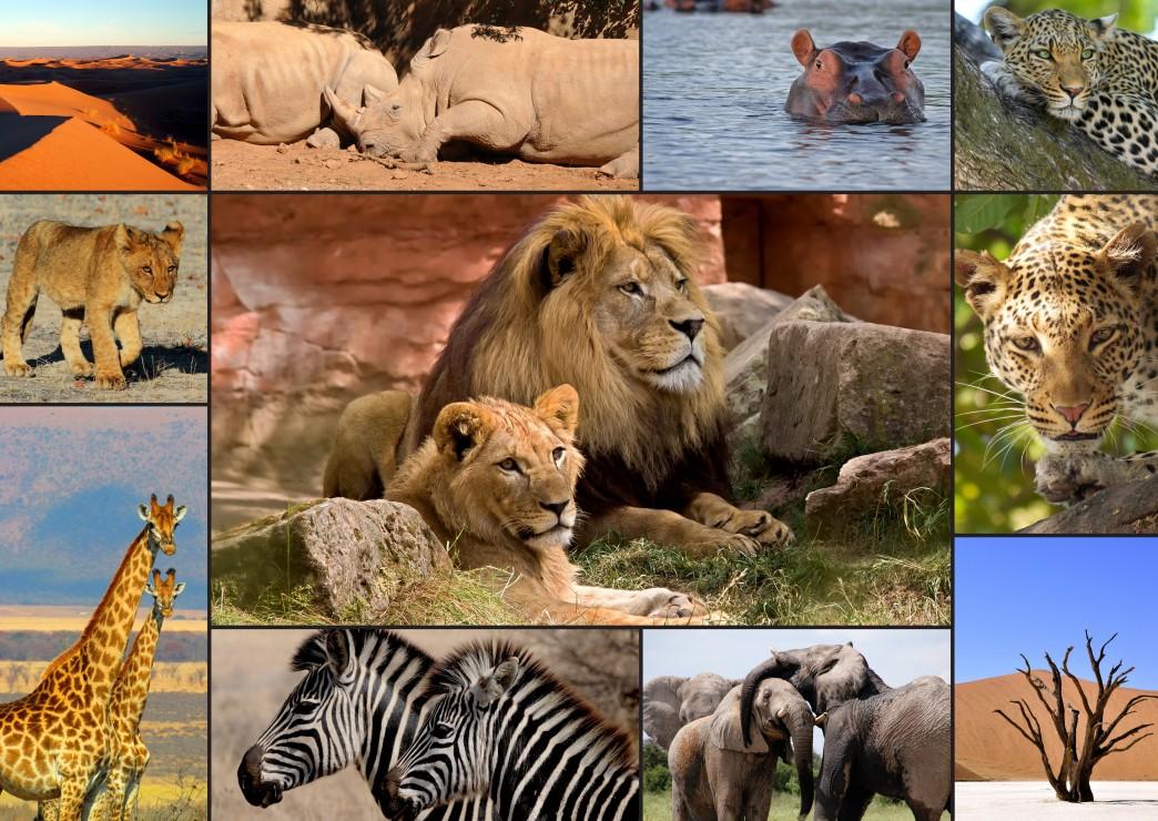 collage-wildlife, 16.95 EUR @ go