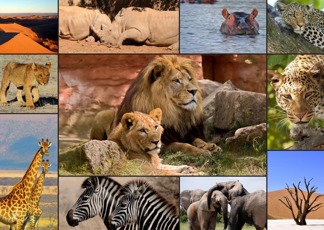 collage-wildlife